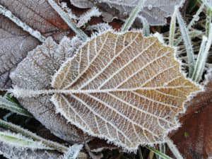 winterblad