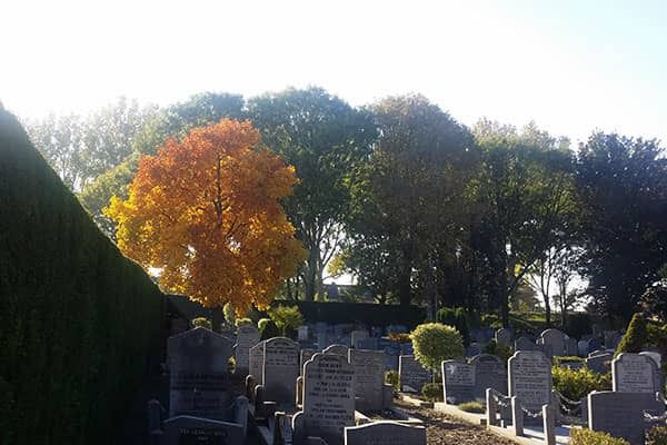 Begraafplaats Iepenhof in herfstsfeer