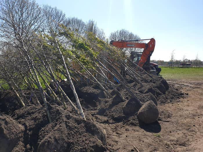 Bomen voor Natuurbegraafplaats Geestmerloo