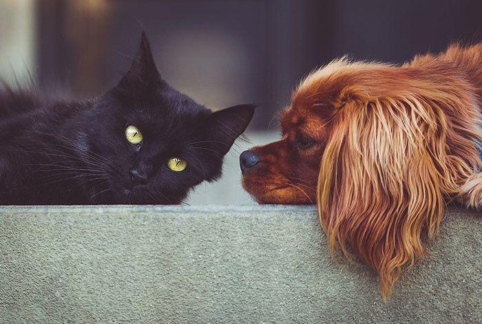 Kat en hond afscheid laten nemen van baasje?