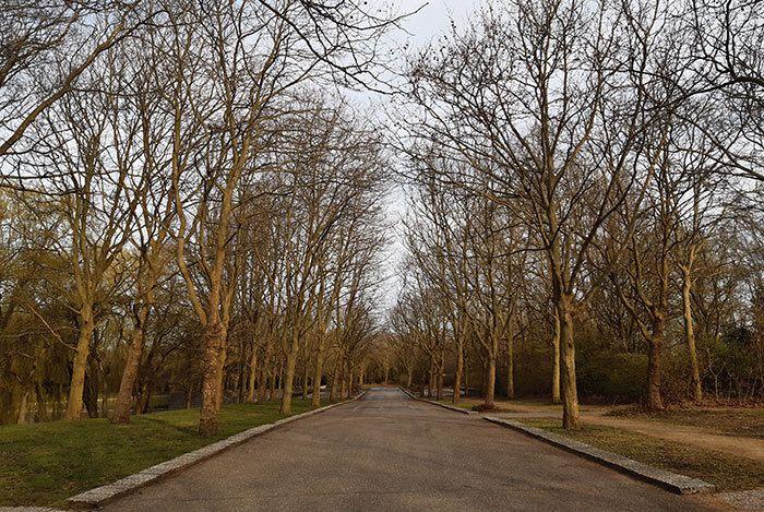 Bomenlaan Westgaarde