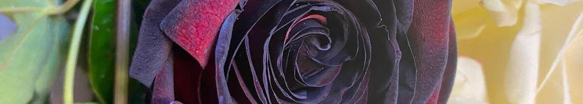 Zwarte roos in rouwboeket Jan Gladon